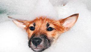 perro baño