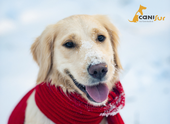 Cuidados para proteger a tu perro del frio
