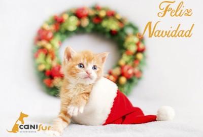 feliz navidad 2020 veterinario motril
