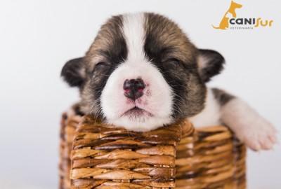 cuidados perro recien nacido